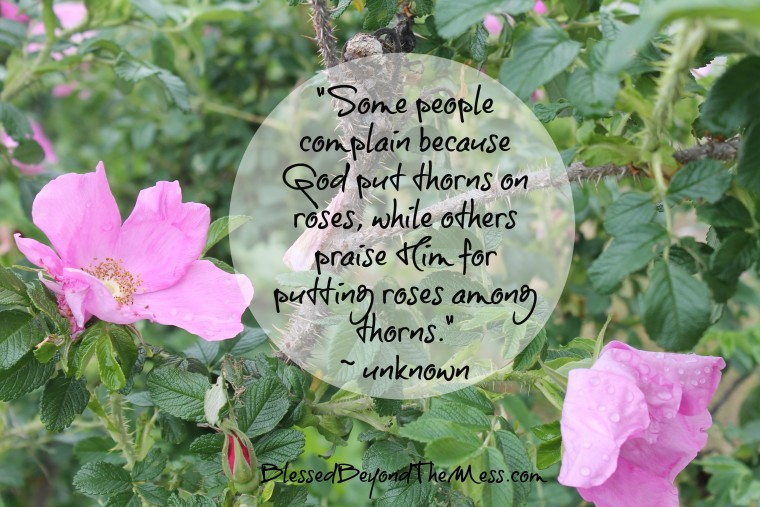 Some people complain because God put thorns on roses, while others praise Him for putting roses among thorns.